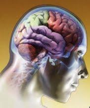 Acdm Cerebro